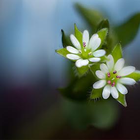 Mali by Sead Kazija - Nature Up Close Flowers - 2011-2013