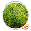 Grass Real Live Wallpaper icon