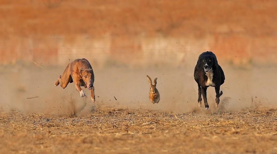 Race for life by Zahoor Salmi - Animals Other Mammals ( animals, nature, wildlife, zahoorsalmi, birds )