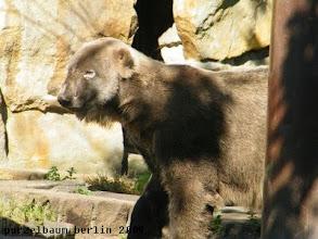 Photo: Knut praesentiert sich nach der Schminkorgie ;-)