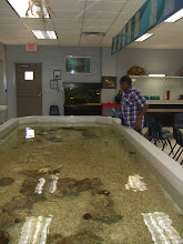 Photo: miles look over the tank in the marine room
