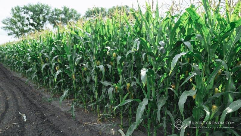 АгроПолігон LNZ Hub: Гарне запилення — надія на високий урожай фото 5 LNZ Group