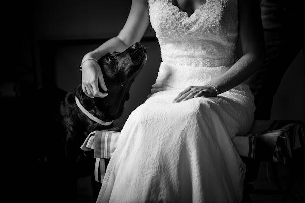 Fotógrafo de bodas antonio luna (antonioluna). Foto del 22.11.2016