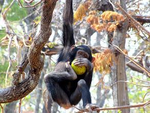 Photo: Chimfunshi Wildlife Orphanage