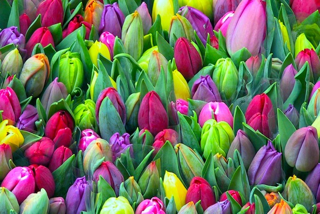 Tulips for sale at the Flower Market.