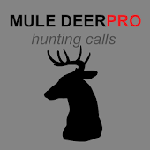 Mule Deer Calls for Hunting UK