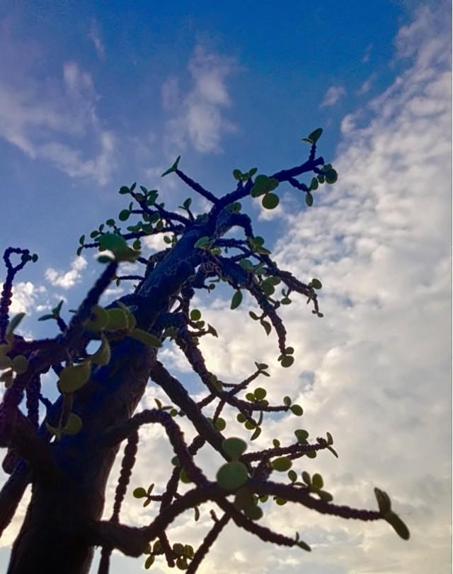 Il silenzio della natura porta lo sguardo al cielo di Silvia Pennisi