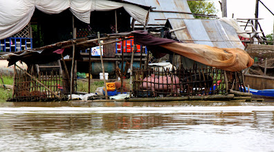 Photo: Year 2 Day 41 -  Floating Pig Pen