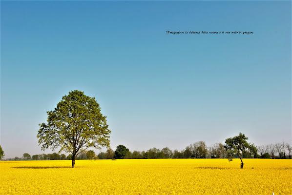 Fotografare la bellezza... di Daimon