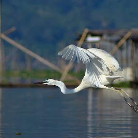 leave by Rusman Budi Prasetyo - Animals Birds ( bird, wildlife,  )