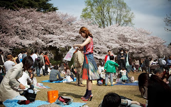 Photo: Heady with beauty and charm, Japan's cherry blossom picnics celebrates environmental values that Western greens have lost  http://aeonm.ag/10DLtYZ