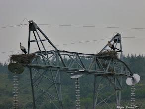Photo: les cigognes nichent en hauteur.... ! ! !