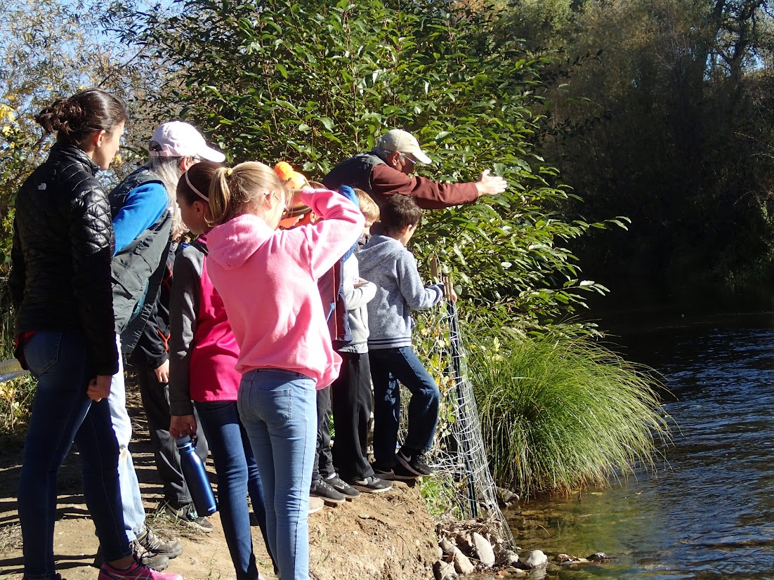 Students and chaperones look for spawning salmon in Putah Creek.