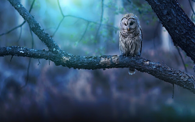 Owl - New Tab in HD