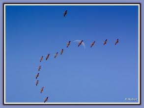 Photo: Die lange Reise der Kraniche in die Brutgebiete (Tagmond)  (ca. 600m bis 800m höhe) The long journey of the cranes in the breeding areas (Bone People) (600m to 800m in height)  PENTAX K20D ISO 100 Belichtung 1/125 Sek. Blende f/5.6 Brennweite 110mm Datum und Uhrzeit (Original)2010:03:20 13:06:07