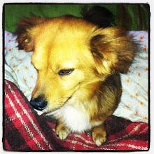 Photo: Puffy preparing to sleep #intercer #dog #doggy #dogs #dogoftheday #instapet #bed #sleep #animal #pet #pets #petstagram #cute #cutie #ilovemydog #life #puppy #romania - via Instagram, http://instagr.am/p/NE0MX0pfv1/