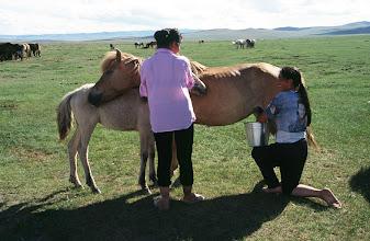 Photo: 03326 ナムジ家/馬の乳搾り