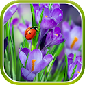 Macro Spring Live Wallpaper icon