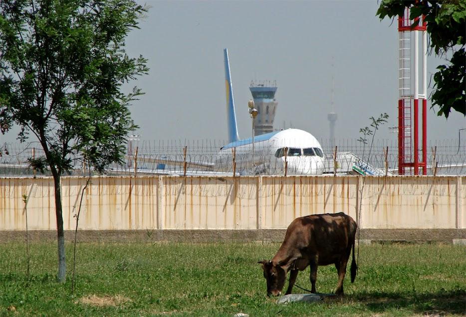 Ташкент, такой Ташкент. На пороге аэропорта