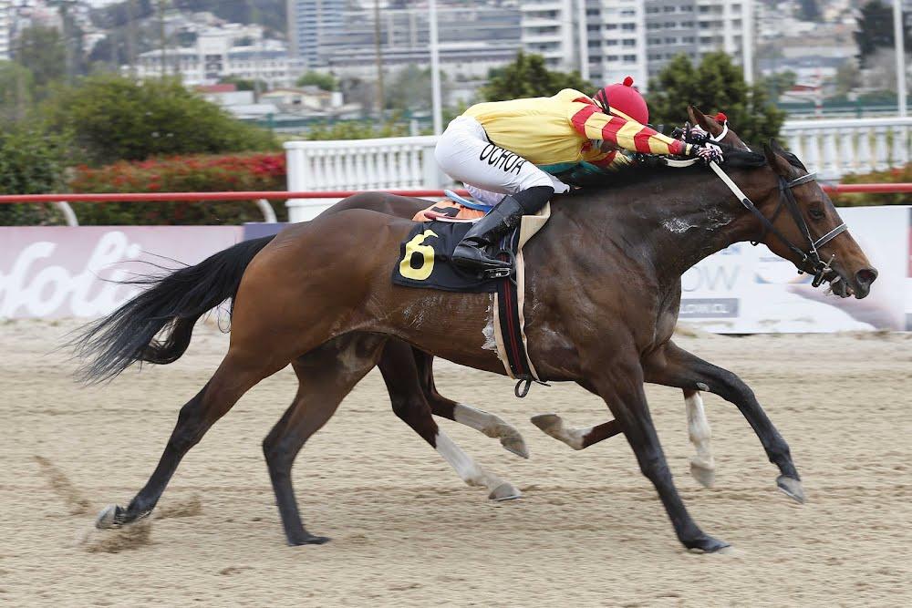 Maya Ka (Omayad) gana Handicap (1300m-Arena-VSC).