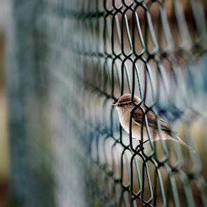 Birdyzaun4.jpg