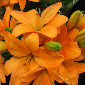 Orange lily. by Peter DiMarco - Flowers Single Flower ( orange flower, floral, flowers, lily, flower )