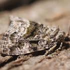 Large Mossy Lithacodia - 9047