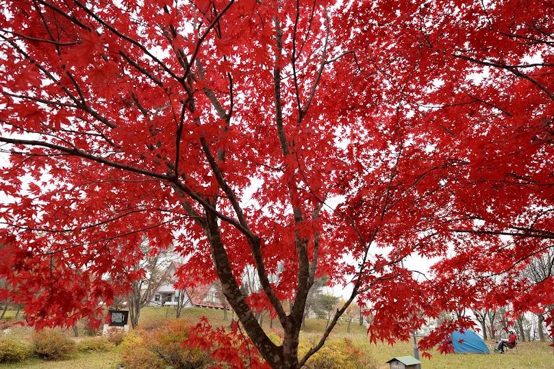 静かな秋の公園
