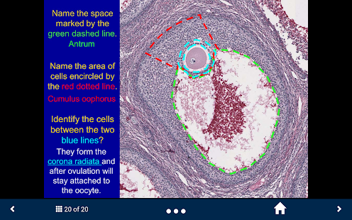 Histology Lite - SecondLook- screenshot thumbnail