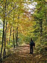 Photo: ...teils im Wald geht es Richtung Höhwirt.