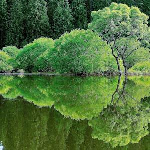 reflexie montana 2.jpg