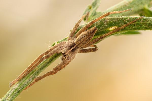 Spider di Sergio Rapagnà