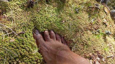 Photo: Fractal moss