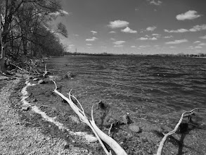 Photo: Black and white photo of a pale log in a lake at Eastwood Park in Dayton, Ohio.
