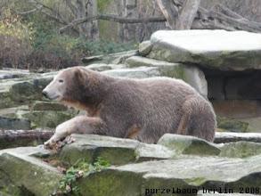 Photo: Aber Knut laesst diese Stelle heute nicht los ;-)