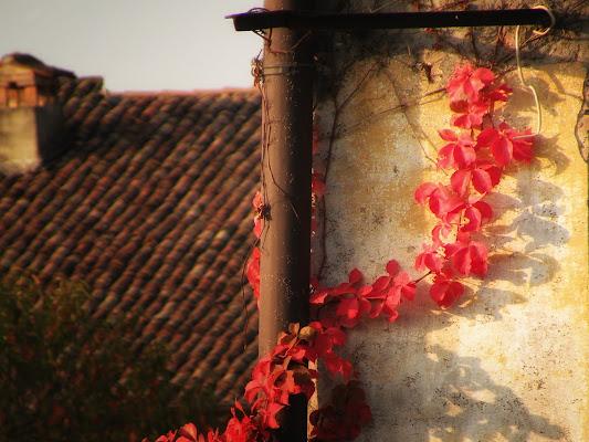 I colori dell'autunno. di GabrieleT