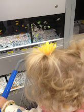 Photo: Her favorite are the florescent fish.
