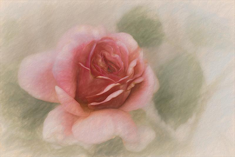Retro Rose di gilclaes