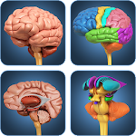 My Brain Anatomy 1.8