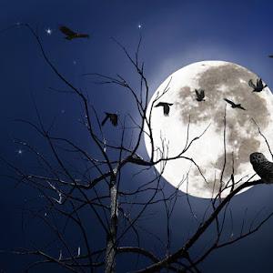 Owl Nightttt.jpg