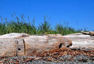 Photo: Debris washed up on shore