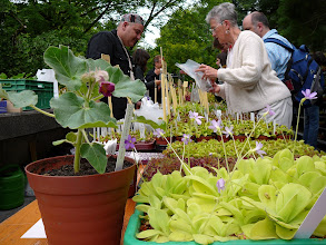 Photo: The Swiss CP-meeting 2010. Beautiful plants for sale and swap.