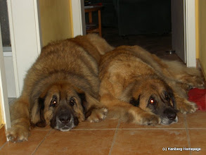 Photo: 2008 - Elli rechts, Enzo links