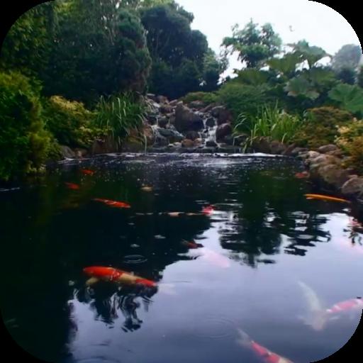 Real pond with Koi
