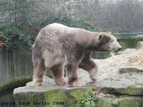 Photo: Knut zeigt sich dunkel eingefaerbt ;-)