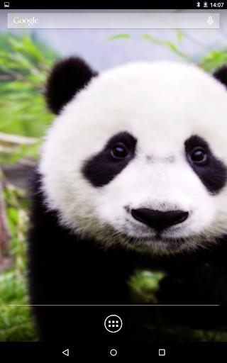 Panda 3D Live Wallpaper