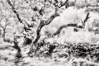 Photo: Woodland Edge (Clive Haynes)