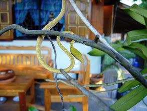 Photo: Green Vine Snake
