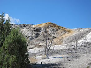 Photo: Trees killed by minerals from hot springs