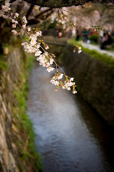 Photo: Philosophers Sakura